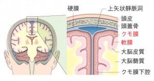 図1 頭蓋内の構造