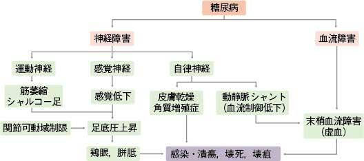 3-疾患53-糖尿病性足病変_図1